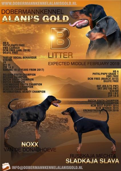 Litter announcement B-litter
