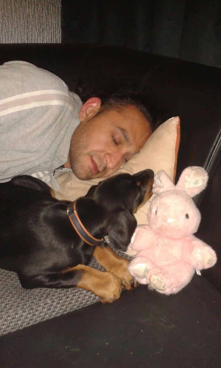 Petrit met vici als pup