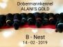 Puppy's B-nest 14-02-2019