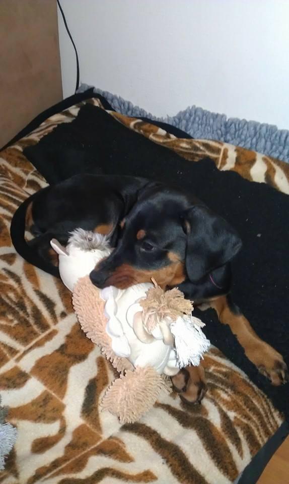 Sacha als pup