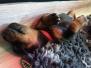 Week 2 van het B-nest